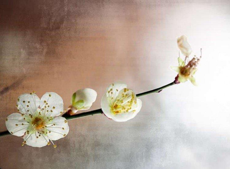 Цветя-Фототапет Винтидж пролетен фон