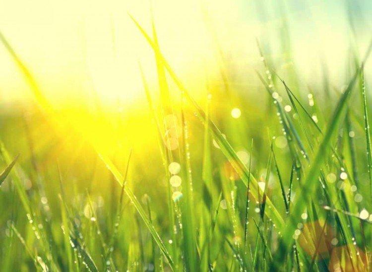 Растения-Фототапет Свежа зелена трева