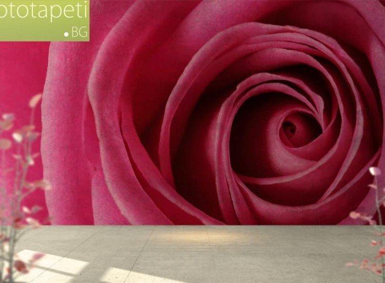 Цветя-Фототапет Розова роза