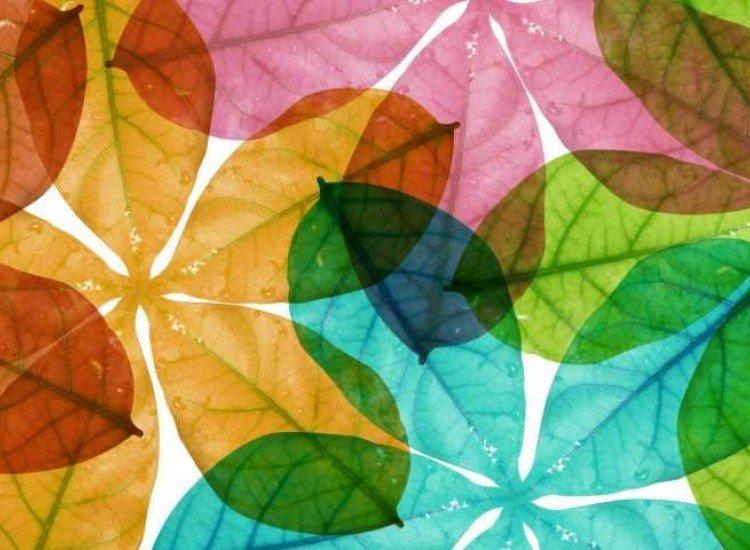 Растения-Фототапет Цветни листа