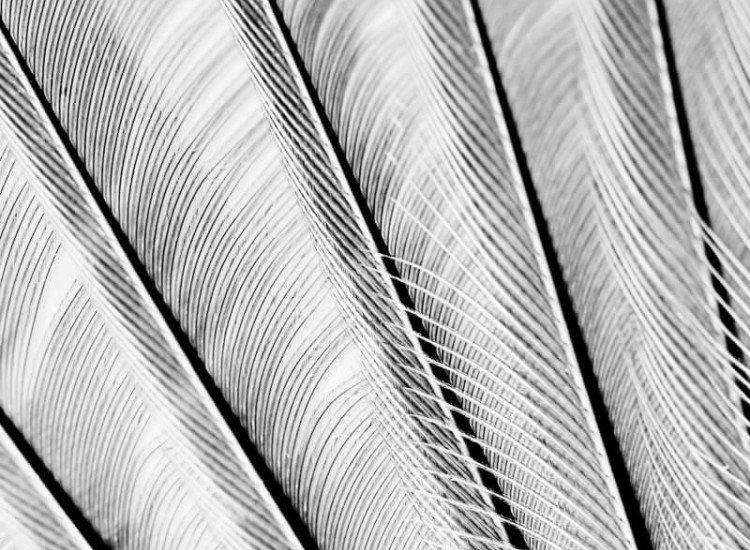 Текстури-Фототапет Крило на птица