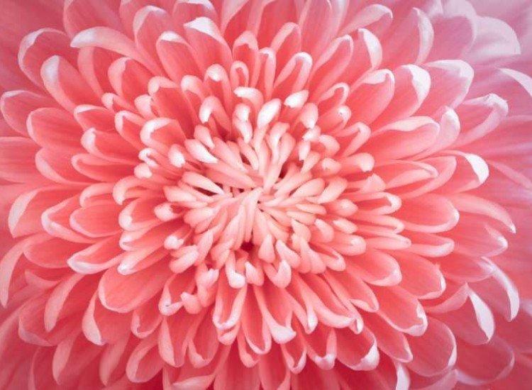 Цветя-Фототапет Цвете в детайли