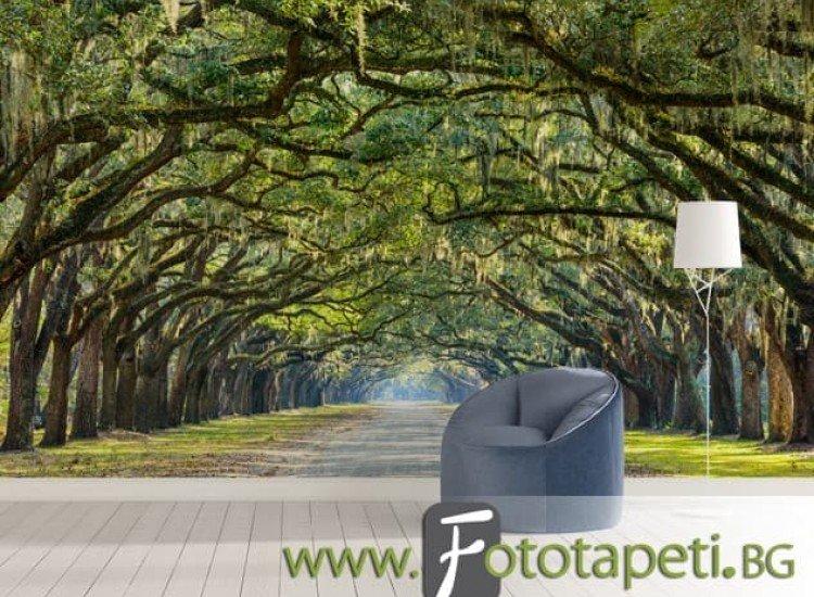 Пейзажи и природа-Фототапет Път между дъбови дървета