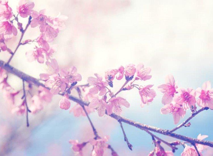 Цветя-Фототапет Винтидж вишневи клони