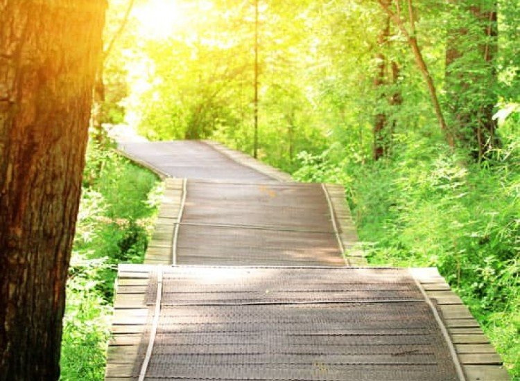 Пейзажи и природа-Фототапет Пътека в гората