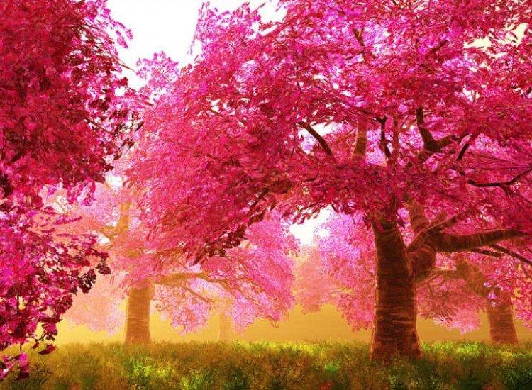 Пейзажи и природа-Фототапет Тайнствена японска вишна