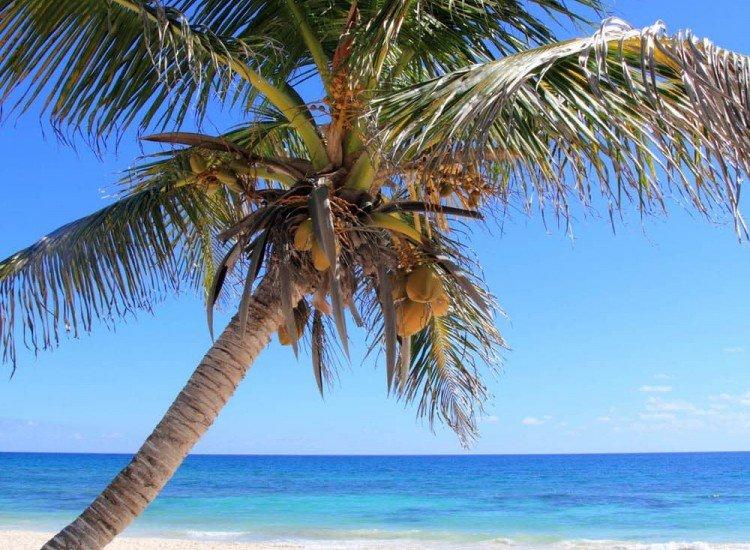 Морски и тропически-Фототапет Палмово дърво