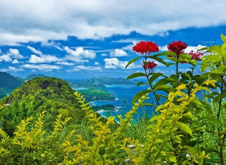 Морски и тропически-Фототапет Сейшелски острови