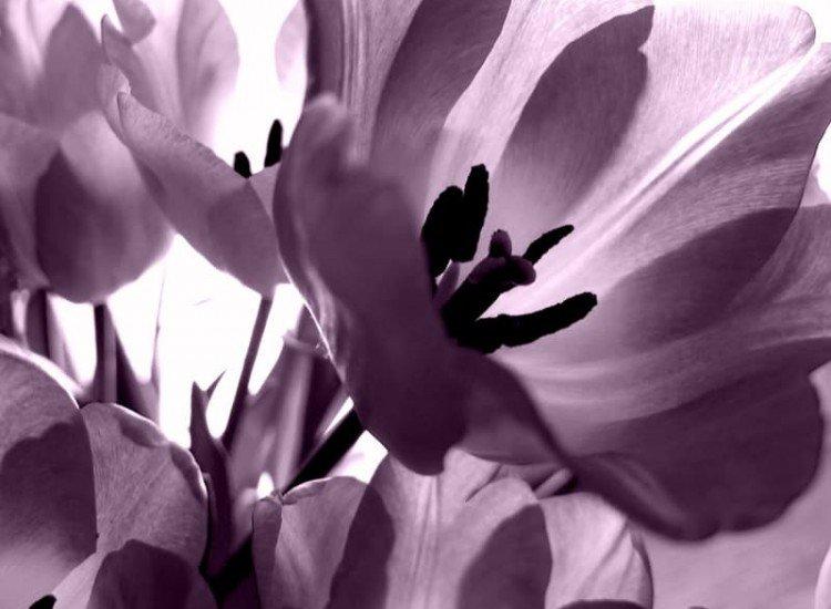 Цветя-Фототапет Лилави лалета