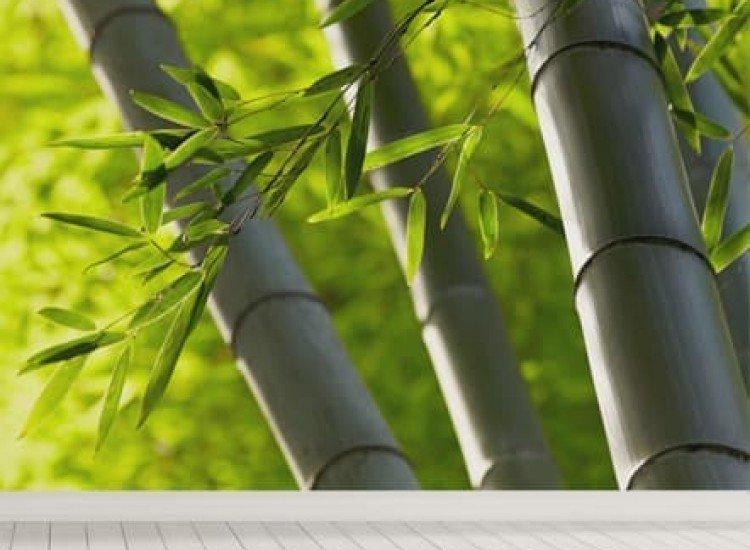 Растения-Фототапет Бамбукова гора