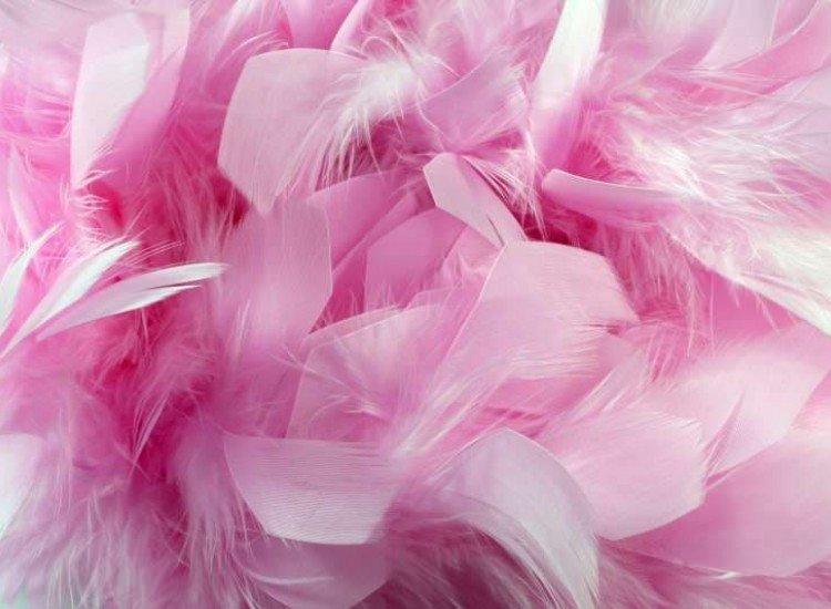 Цветя-Фототапет Розови пера