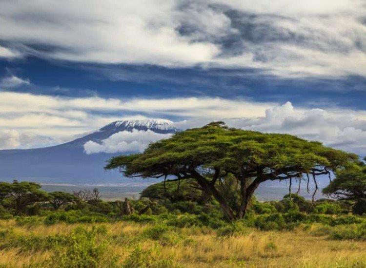 Пейзажи и природа-Фототапет Изглед към Килиманджаро