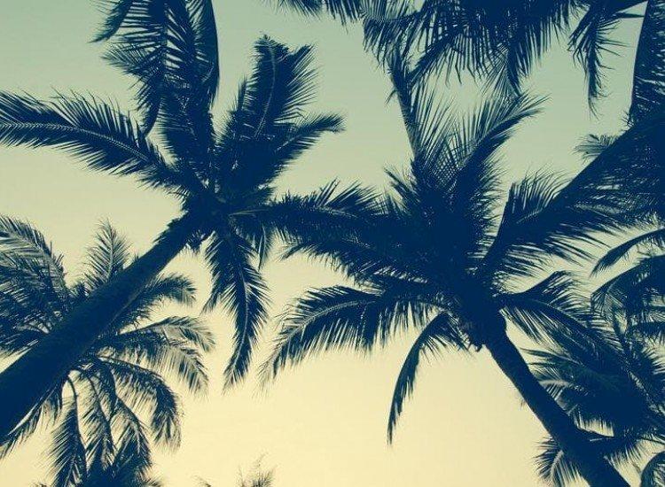 Растения-Фототапет Палмови дървета по залез