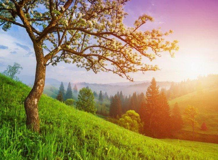Пейзажи и природа-Фототапет Зелен хълм в Карпатите