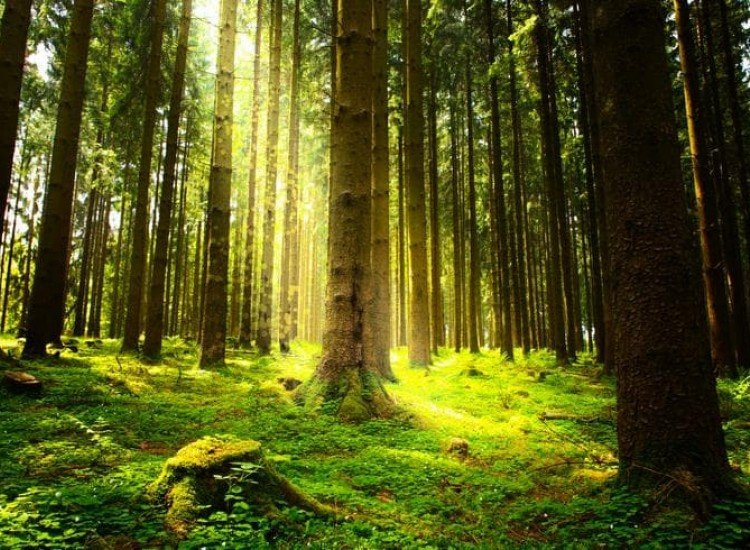 Пейзажи и природа-Фототапет Лятна гора