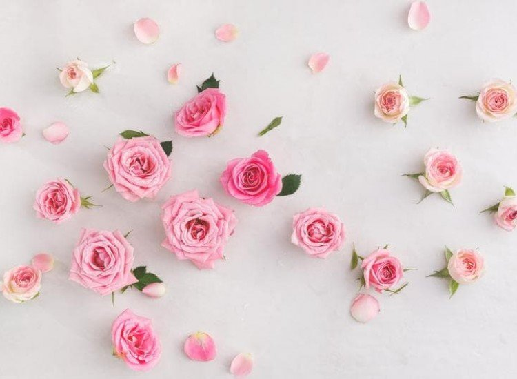 Цветя-Фототапет Пастелни рози