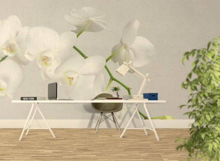 Цветя-Фототапет Клон на бяла орхидея