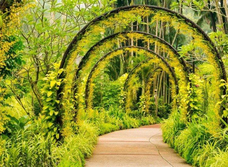 Пейзажи и природа-Фототапет Арка от жълти орхидеи