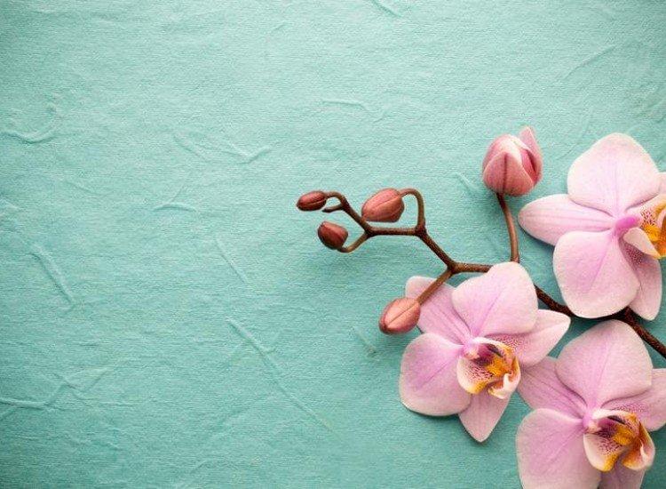 Цветя-Фототапет Розова орхидея на син фон