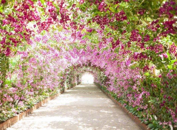 Пейзажи и природа-Фототапет Пътека в ботаническа градина