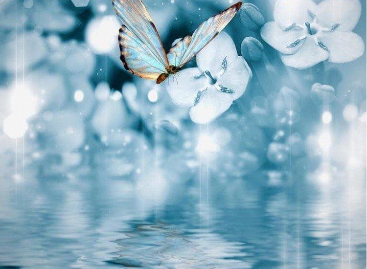 Животни и дива природа-Фототапет Пеперуда на син фон