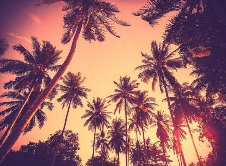 Морски и тропически-Фототапет Винтидж фон с палмови дървета