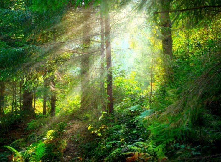 Пейзажи и природа-Фототапет В гората
