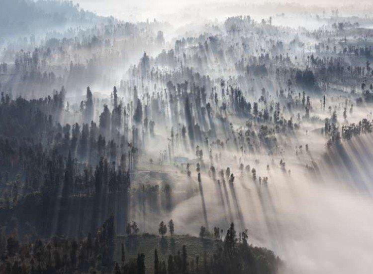 Пейзажи и природа-Фототапет Изгрев в гората