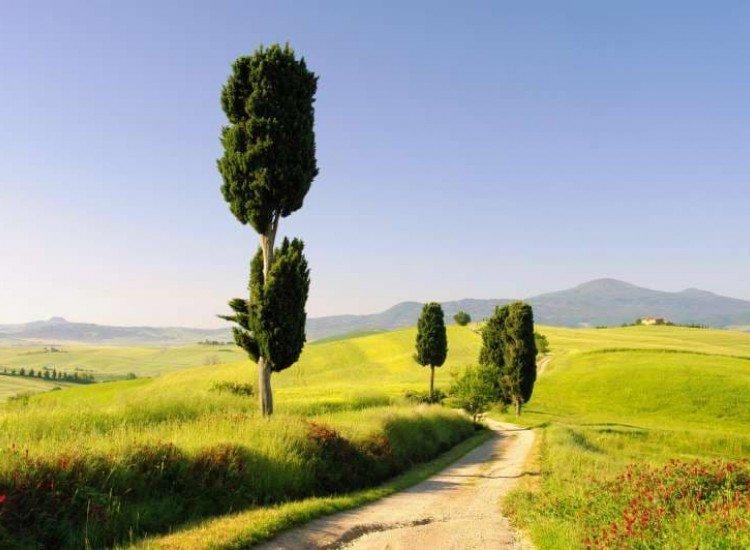 Пейзажи и природа-Фототапет Път в Тоскана