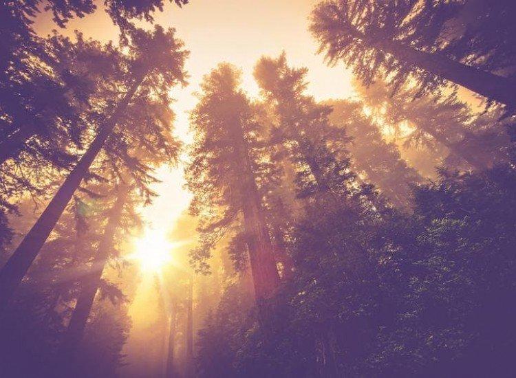 Пейзажи и природа-Фототапет Пътека в мъгливите гори