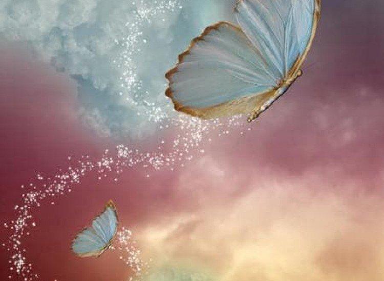 Животни и дива природа-Фототапет Пеперудена магия