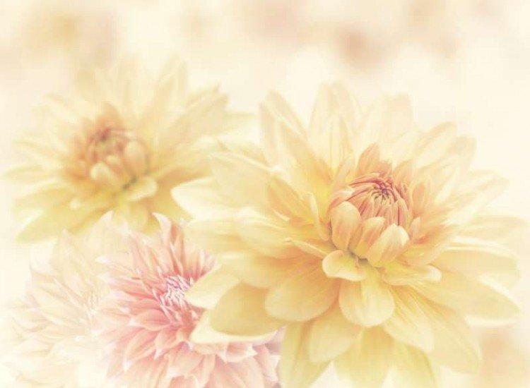 Цветя-Фототапет Далия