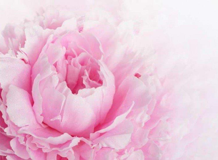 Цветя-Фототапет Ретро божур