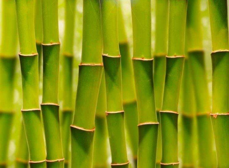 Растения-Фототапет Слънчев бамбук
