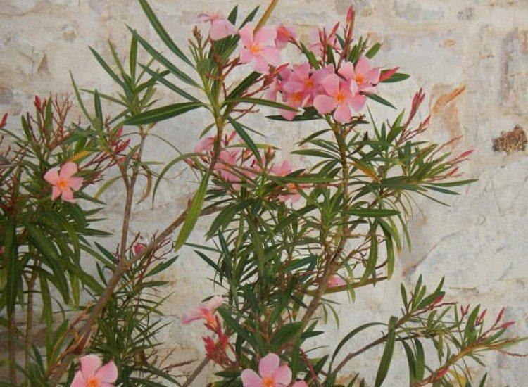 Цветя-Фототапет Винтидж фон с цветя